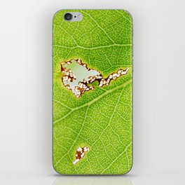 Aspen leaf 2 iPhone Skin