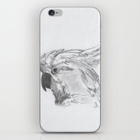 rio iPhone & iPod Skins featuring Rio by Amy Lawlor Creations