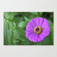 rileigh smirl Canvas Prints featuring Bright Flower by Rileigh Smirl