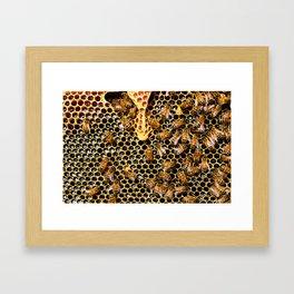 swarm of bees on honeycomb Framed Art Print