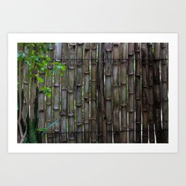 Dreamy Bamboo Art Print