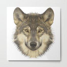 Wolf portrait, animals, nature Metal Print