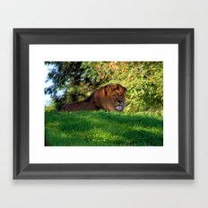 King of the Jungle - Lion deep in thought Framed Art Print