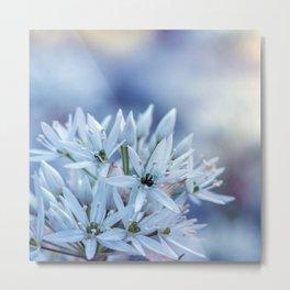 Allium Ursinium Metal Print