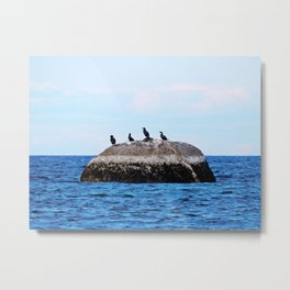 Cormorants on the Big Rock Metal Print