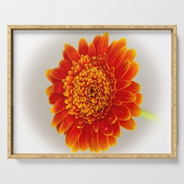 Soft Large Orange Gerber Daisy Serving Tray