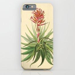 Flower 063 tillandsia rubida Madder coloured Tillandsia26 iPhone Case