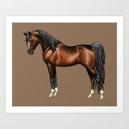 Dark Bay Arabian Horse with 4 White Socks Art Print