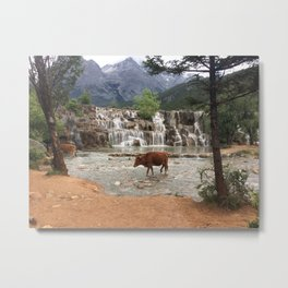 Cows in the River Metal Print