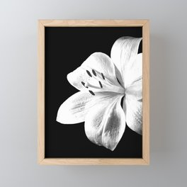 White Lily Black Background Framed Mini Art Print