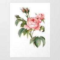 botanical Art Prints featuring Botanical by Goga Alexandra