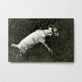 Goat Standing in Bushes Metal Print