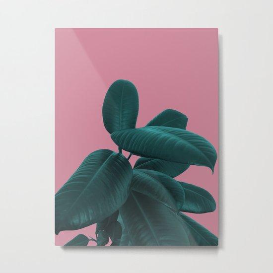 Ficus Elastica #11 #WildRose #decor #art #society6 Metal Print