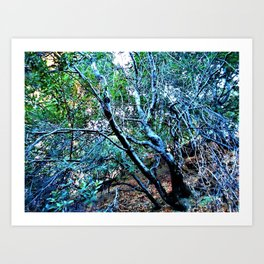 """Hillside Trees at Dusk"" Art Print"