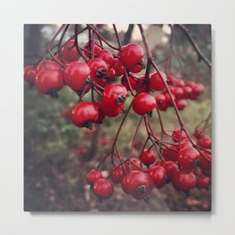 Christmas Holiday Red Berries Metal Print