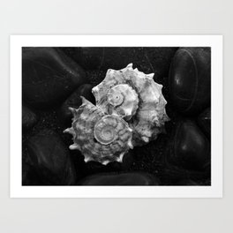 Shell No.3 Art Print