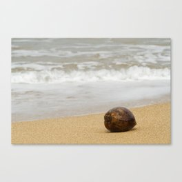Coconut on the Beach Canvas Print
