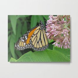 Monarch and Milkweed Metal Print
