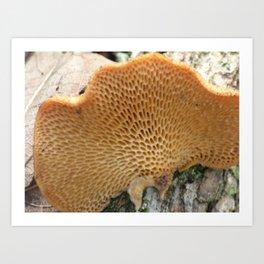 mushroom underside Art Print