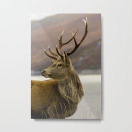 Autumnal Stag Metal Print
