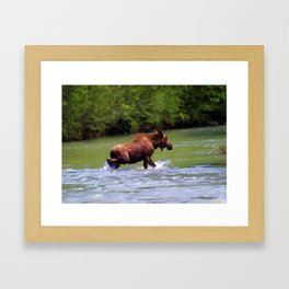 River Crossing Moose Framed Art Print
