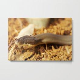 Olive Python Metal Print