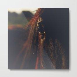 Horse, macro photography, head, mane, sunset, hasselblad, italy, horses Metal Print