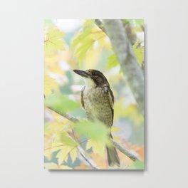 Australian Butcher Bird Metal Print