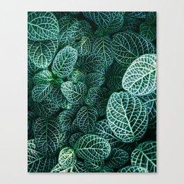 Leaves by Samuel Zeller Canvas Print