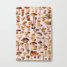 French Vintage Pink Mushrooms Chart Adolphe Millot Champignons Larousse Pour Tous Poster Metal Print
