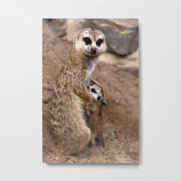 Meerkats | Erdmännchen Metal Print