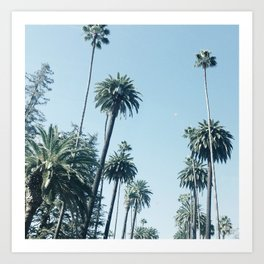 Look Up It's Palms Art Print