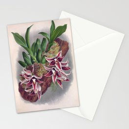 Paphinia Lindeniana Vintage Wine Orchids In A Log Stationery Cards