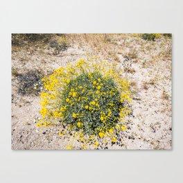 Super Bloom 7290 Paradise Joshua Tree Canvas Print