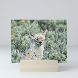 Showing off My Pearly Whites - Yellowstone Coyote Mini Art Print