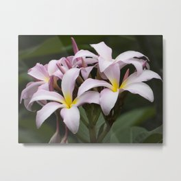 A Spray of Plumeria Metal Print