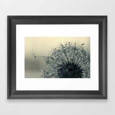 dandelion grey III Framed Art Print