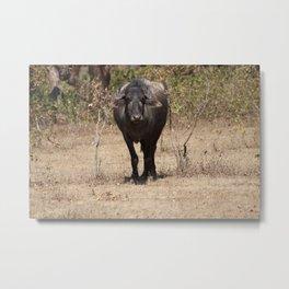 The way of the Buffalo Metal Print