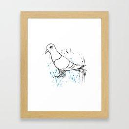 Bird Of Grey Framed Art Print