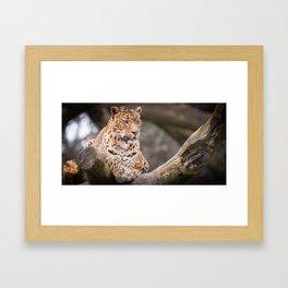 Sri Lankan Leopard Framed Art Print