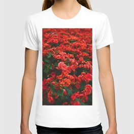 Red Rose Garden (Color) T-shirt