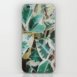 Verigated Rubber Plant iPhone Skin