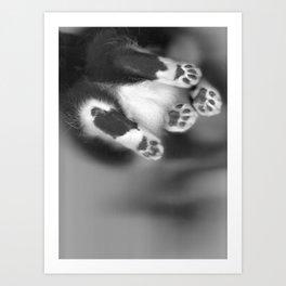 Cat Scan III Art Print