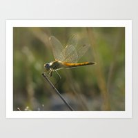 dragonfly Art Prints featuring dragonfly by giol's by gianalberto oliva