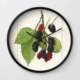 Blackberries (Rubus subg Rubus Watson) (1912) by Ellen Isham Schutt Wall Clock