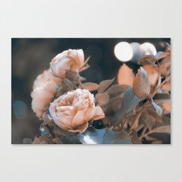warm evenings Canvas Print