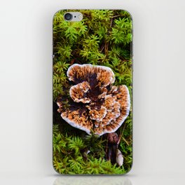 Understory of an Old Growth Lodgepole Pine Forest in Jasper National Park, Canada iPhone Skin
