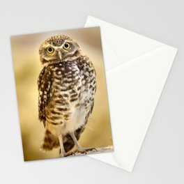 Burrowing Owl 1 Stationery Cards