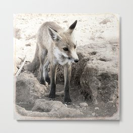 Fox in the shade Metal Print