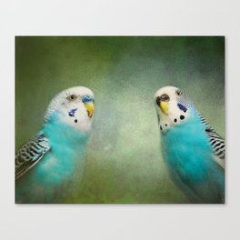 The Budgie Collection - Budgie Pair Canvas Print